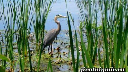 Птицы болот. Описание, названия и особенности птиц болот