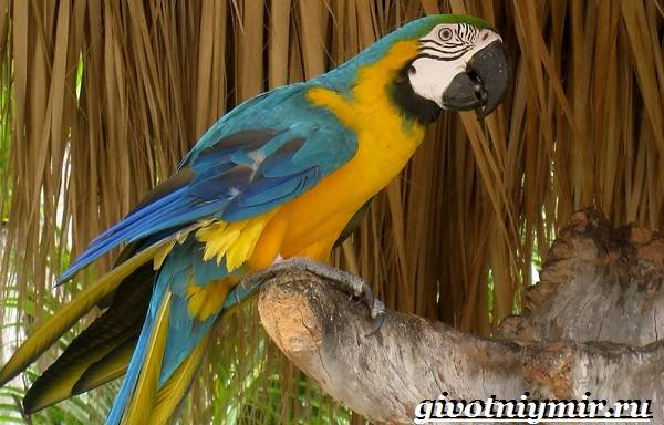 Птицы-болот-Описание-названия-и-особенности-птиц-болот-14