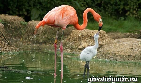 Птицы-болот-Описание-названия-и-особенности-птиц-болот-15