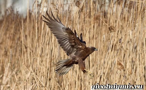 Птицы-болот-Описание-названия-и-особенности-птиц-болот-16