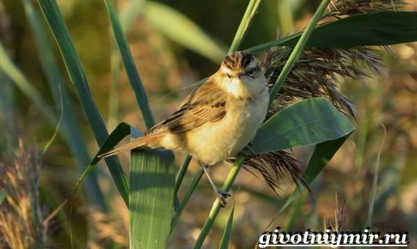 Птицы-болот-Описание-названия-и-особенности-птиц-болот-17