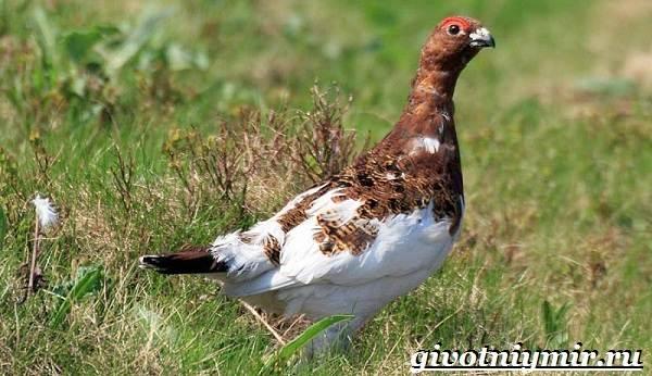 Птицы-болот-Описание-названия-и-особенности-птиц-болот-8
