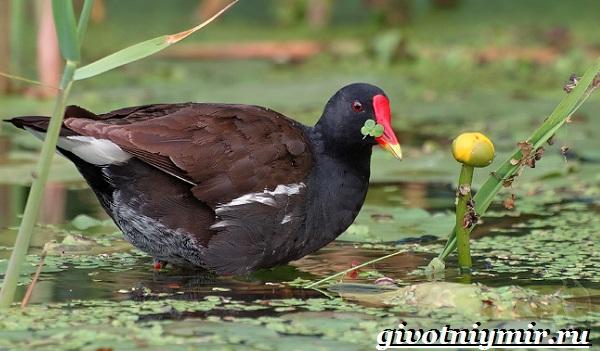 Птицы-болот-Описание-названия-и-особенности-птиц-болот