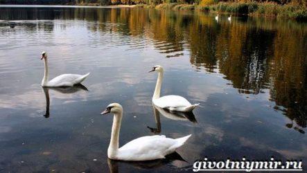 Птицы озёр. Описание, названия и особенности птиц озер