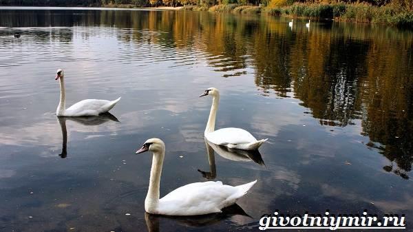 Птицы-озёр-Описание-названия-и-особенности-птиц-озер-1
