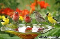 Редкие птицы. Описание и особенности редких птиц