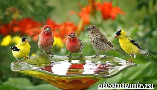 Редкие-птицы-Описание-и-особенности-редких-птиц-1