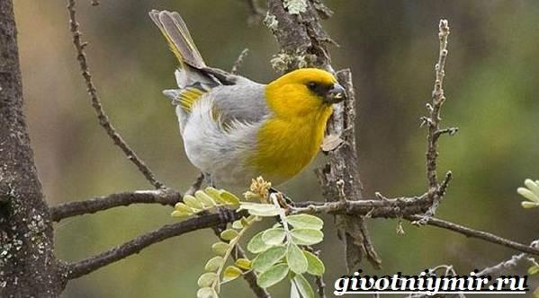 Редкие-птицы-Описание-и-особенности-редких-птиц-10