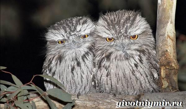 Редкие-птицы-Описание-и-особенности-редких-птиц-12