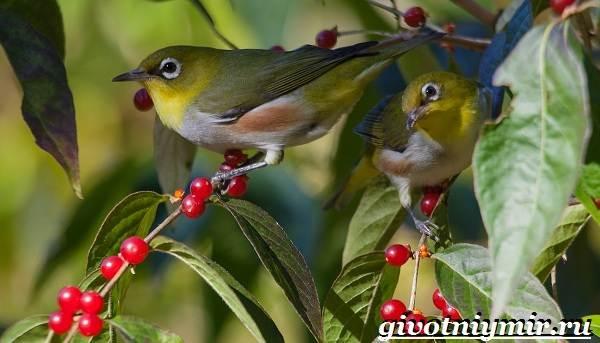 Редкие-птицы-Описание-и-особенности-редких-птиц-13