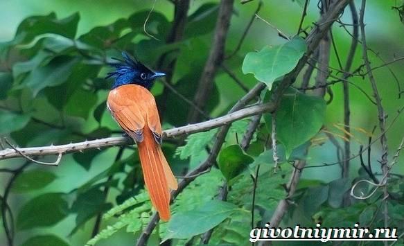 Редкие-птицы-Описание-и-особенности-редких-птиц-14