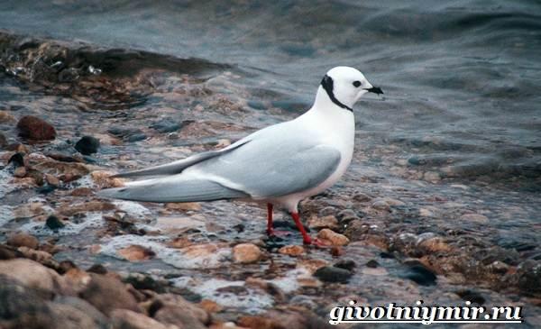 Редкие-птицы-Описание-и-особенности-редких-птиц-15