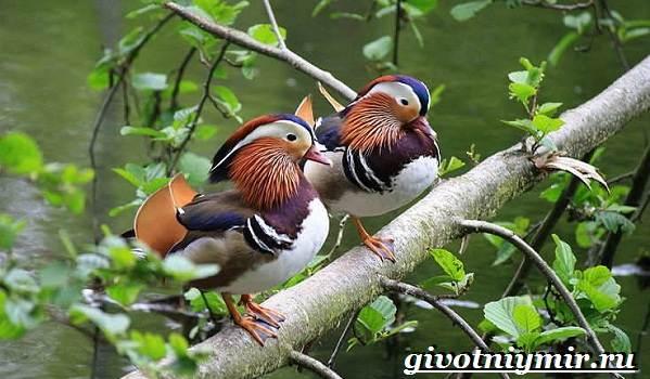 Редкие-птицы-Описание-и-особенности-редких-птиц-16