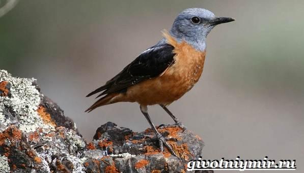 Редкие-птицы-Описание-и-особенности-редких-птиц-18