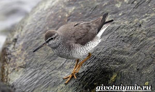 Редкие-птицы-Описание-и-особенности-редких-птиц-19