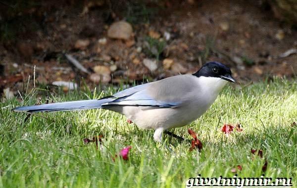Редкие-птицы-Описание-и-особенности-редких-птиц-20