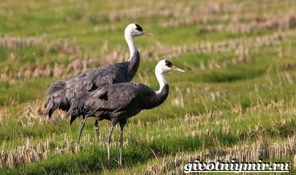 Редкие-птицы-Описание-и-особенности-редких-птиц-21