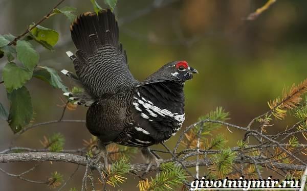 Редкие-птицы-Описание-и-особенности-редких-птиц-22