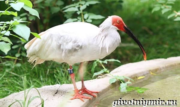 Редкие-птицы-Описание-и-особенности-редких-птиц-3