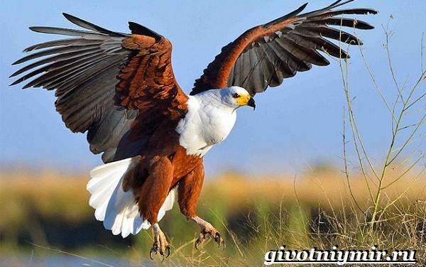 Редкие-птицы-Описание-и-особенности-редких-птиц-4