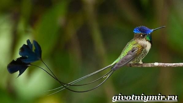Редкие-птицы-Описание-и-особенности-редких-птиц-5