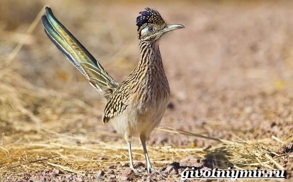 Редкие-птицы-Описание-и-особенности-редких-птиц-6