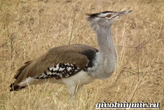 Редкие-птицы-Описание-и-особенности-редких-птиц-7