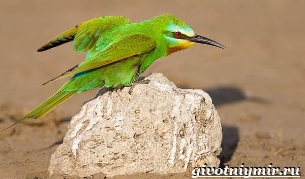 Редкие-птицы-Описание-и-особенности-редких-птиц-8