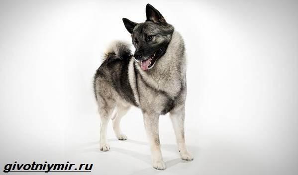 Редкие-собаки-Описание-и-особенности-редких-пород-собак-1