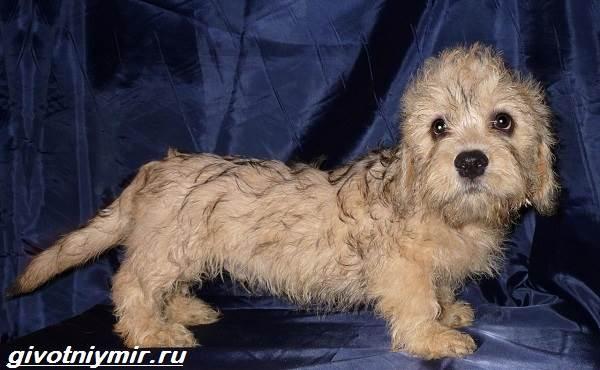 Редкие-собаки-Описание-и-особенности-редких-пород-собак-6