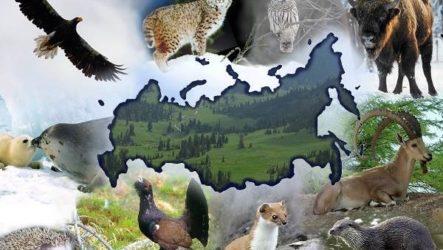 Редкие животные России