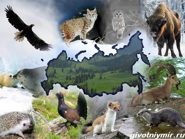 Реферат редкие и исчезающие животные россии 8139