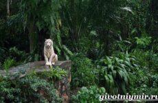 Животные джунглей. Описание, названия и особенности животных джунглей