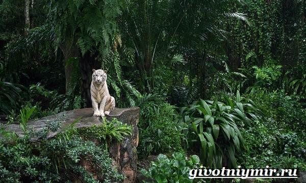 Животные-джунглей-Описание-названия-и-особенности-животных-джунглей-1