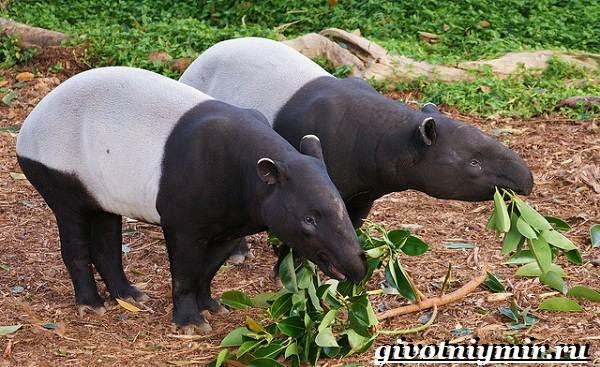 Животные-джунглей-Описание-названия-и-особенности-животных-джунглей-2