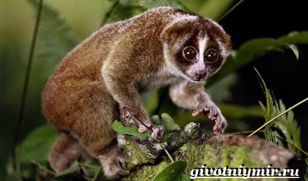 Животные-джунглей-Описание-названия-и-особенности-животных-джунглей-4