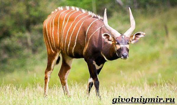 Животные-джунглей-Описание-названия-и-особенности-животных-джунглей-5