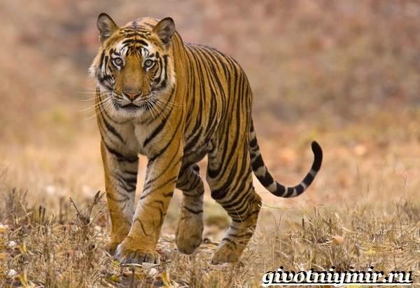 Животные-джунглей-Описание-названия-и-особенности-животных-джунглей-6