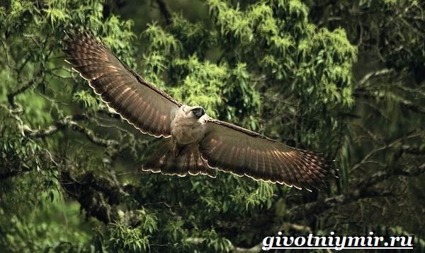 Животные-джунглей-Описание-названия-и-особенности-животных-джунглей-8