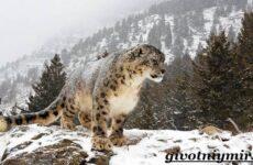 Животные Казахстана. Описание, названия и особенности животных Казахстана