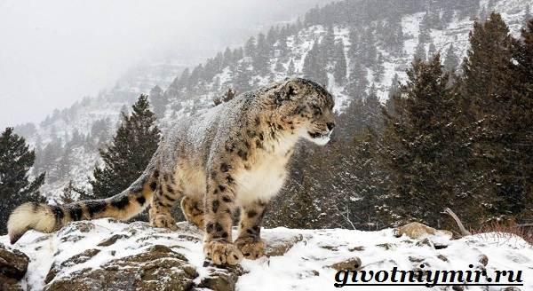 Животные-Казахстана-Описание-названия-и-особенности-животных-Казахстана-1