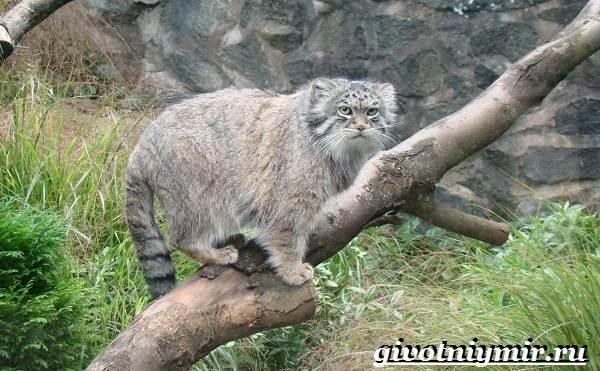 Животные-Казахстана-Описание-названия-и-особенности-животных-Казахстана-10