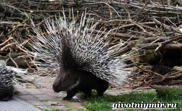 Животные-Казахстана-Описание-названия-и-особенности-животных-Казахстана-12
