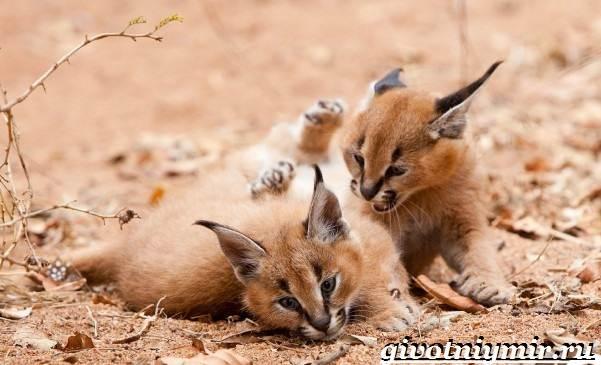 Животные-Казахстана-Описание-названия-и-особенности-животных-Казахстана-13
