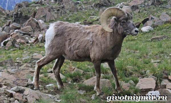 Животные-Казахстана-Описание-названия-и-особенности-животных-Казахстана-15