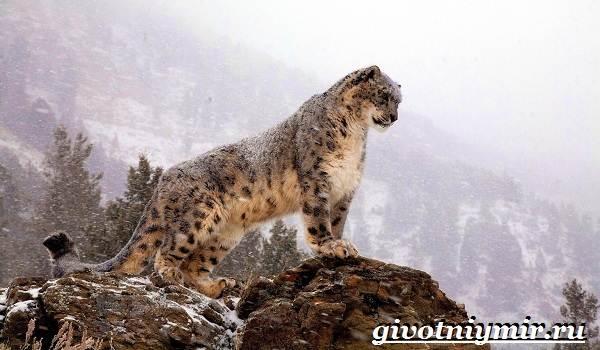 Животные-Казахстана-Описание-названия-и-особенности-животных-Казахстана-17