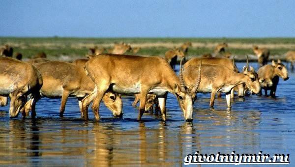 Животные-Казахстана-Описание-названия-и-особенности-животных-Казахстана-2