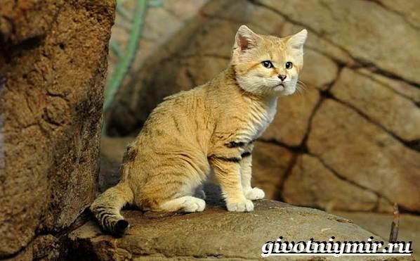 Животные-Казахстана-Описание-названия-и-особенности-животных-Казахстана-4
