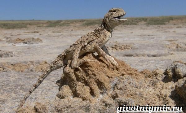 Животные-Казахстана-Описание-названия-и-особенности-животных-Казахстана-5