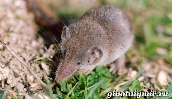 Животные-Казахстана-Описание-названия-и-особенности-животных-Казахстана-9